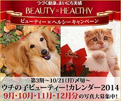 ウチの子ビューティー!カレンダー2014オーディション開催中!